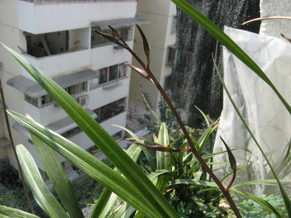 阳台外架个框种兰花