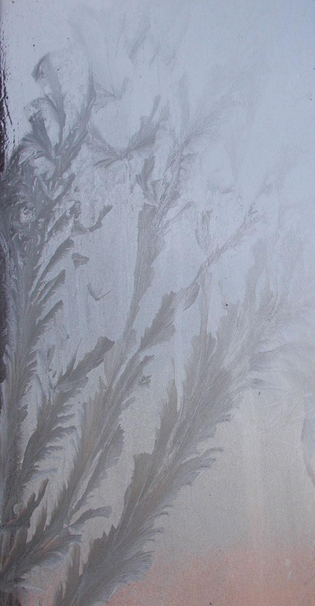 寒冷的东北的玻璃窗上结了冰霜,形成的窗花竟像南方植物的叶子哦。