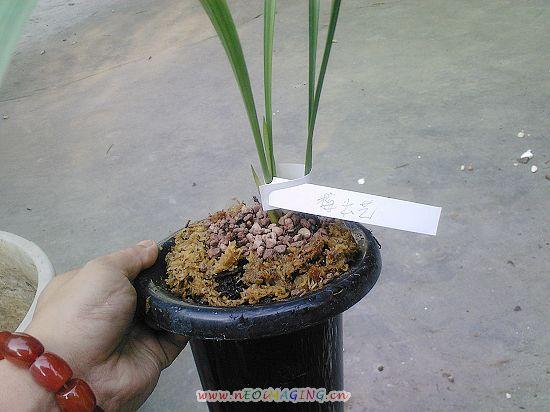 水苔怎么种植兰花步骤图解