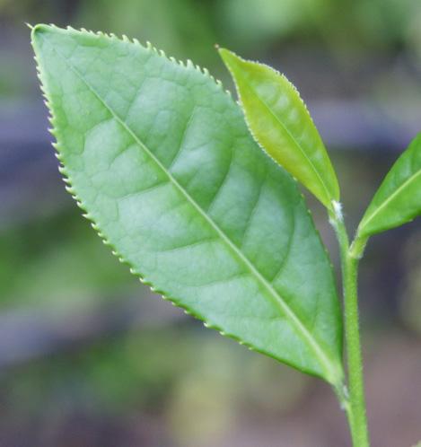 背景 壁纸 昆虫 绿色 绿叶 树叶 植物 桌面 469_498图片