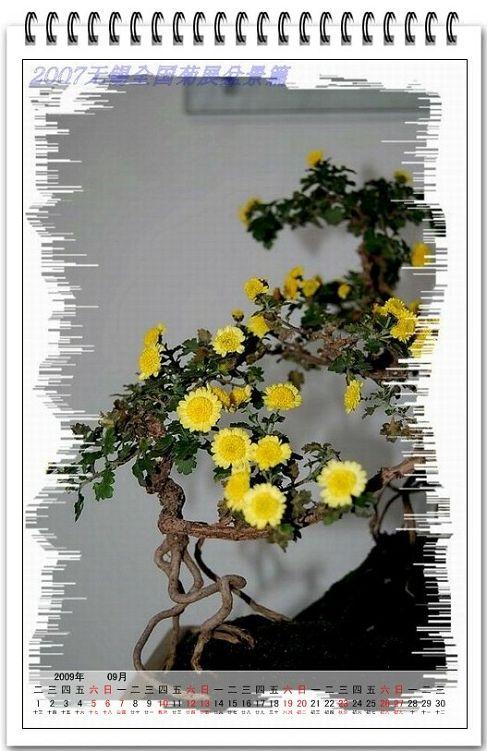 菊花盆景挂历图片