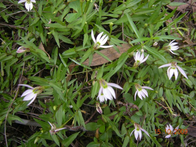 寻找野生兰花首先要到宽叶林的山区.野生兰花就在那里