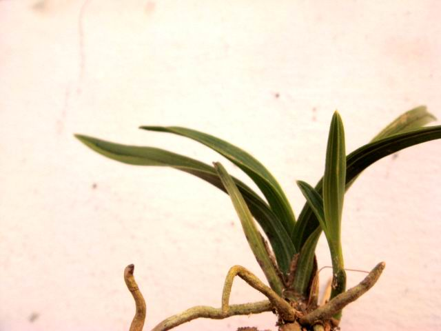ppt 背景 壁纸 电脑桌面 发芽 花 绿色 绿色植物 嫩芽 嫩叶 新芽 植物图片