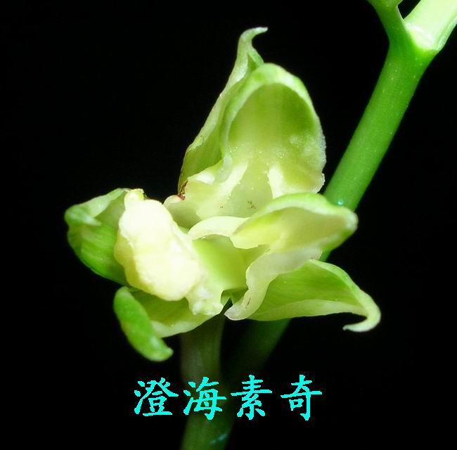 黄荣鸿 黄荣汉/园主-黄荣汉(别名:黄荣鸿)
