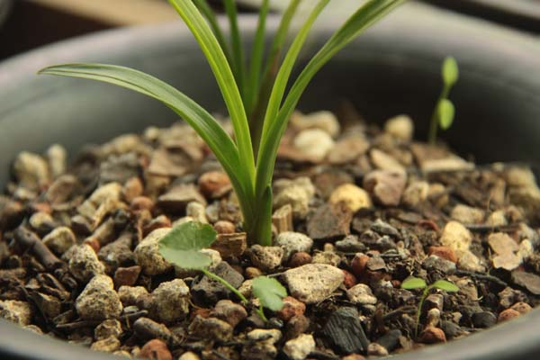 qq植物头像带有君字的图片大全