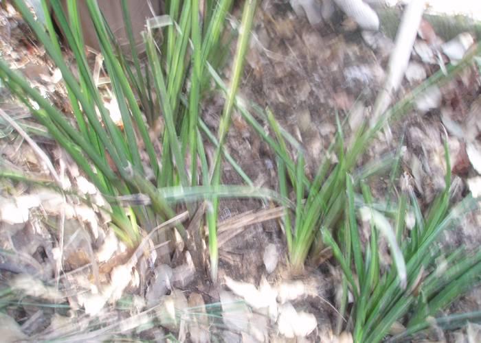 宝鸡市近郊发现野生蕙兰种群