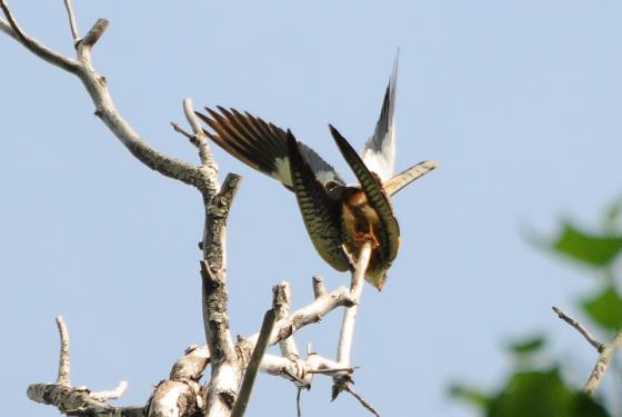 壁纸 动物 鸟 鸟类 雀 560_375