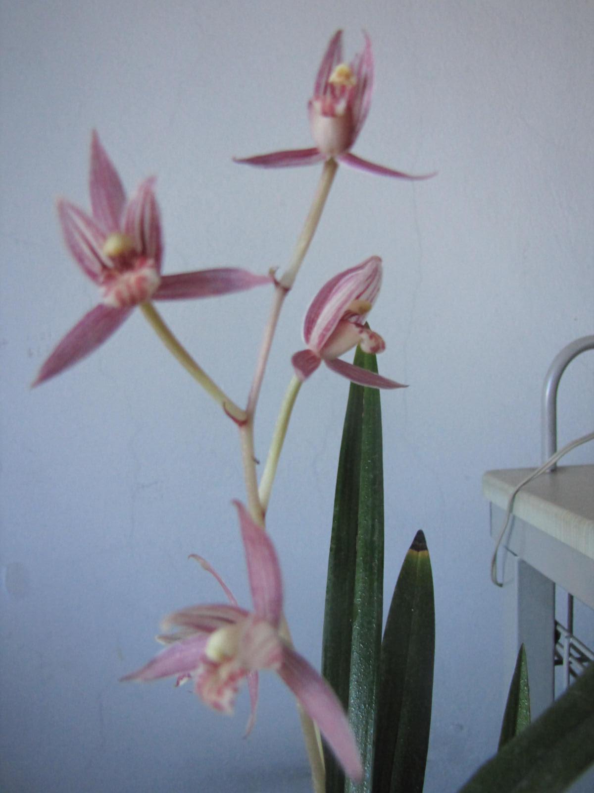 鲜花名称-这个花叫什么名字 现在忘记啦