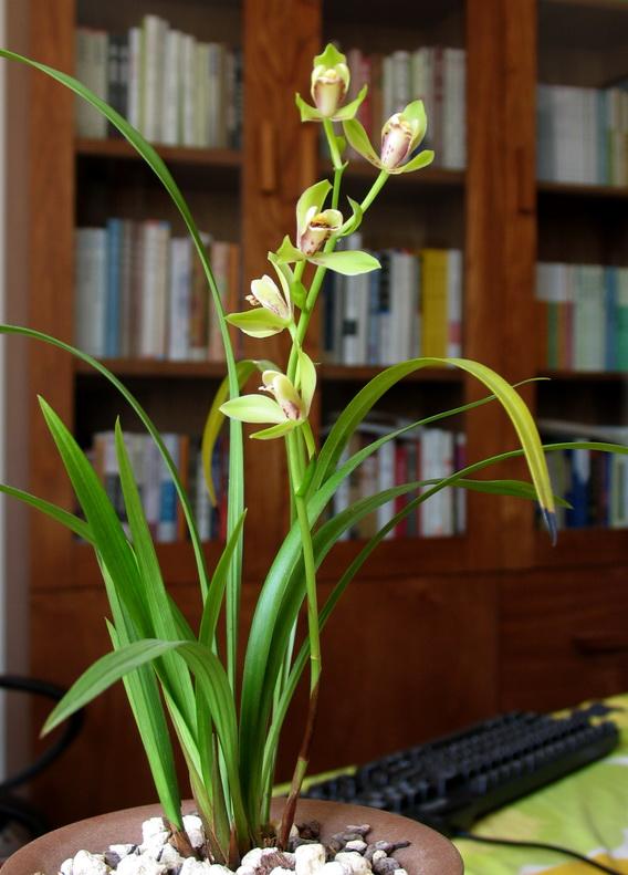 家养植物花卉图片大全