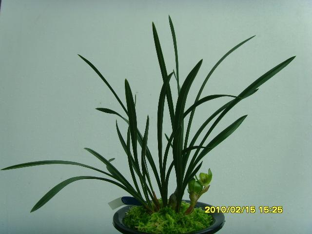 赞美植物的诗句