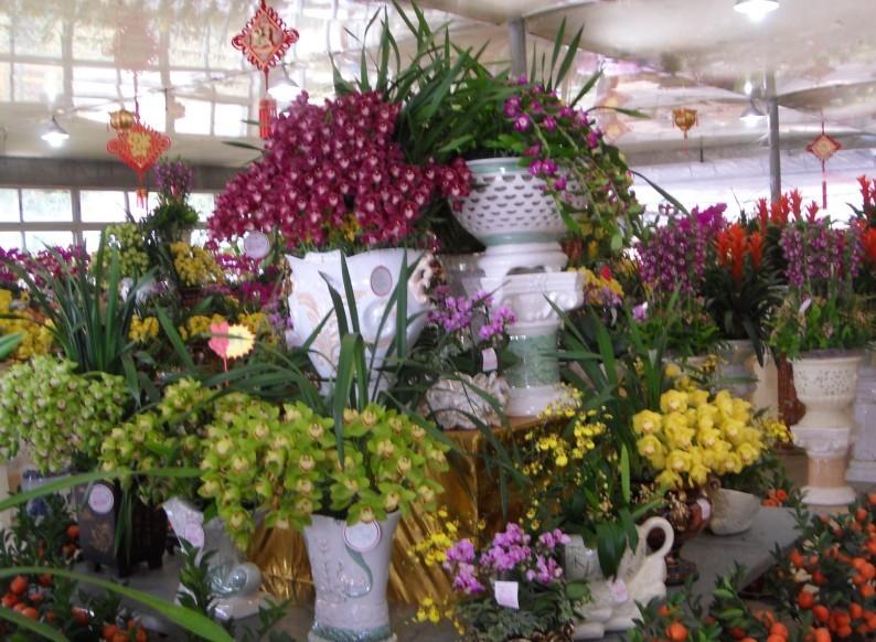 参观广州芳村花卉展览