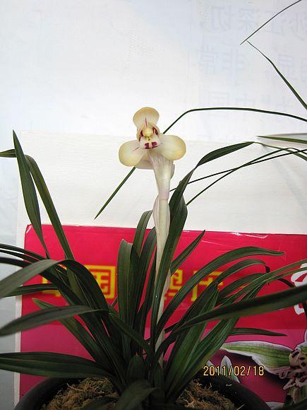 第二十一届中国 昆明泛亚 兰花博览会 豆瓣篇