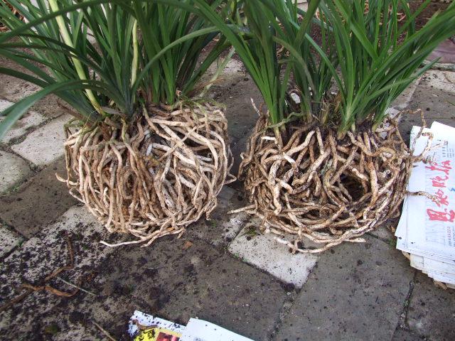 这种团粒土壤结构是土壤肥力的重要指标