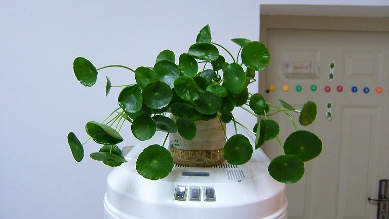 油桶改造植物角图片