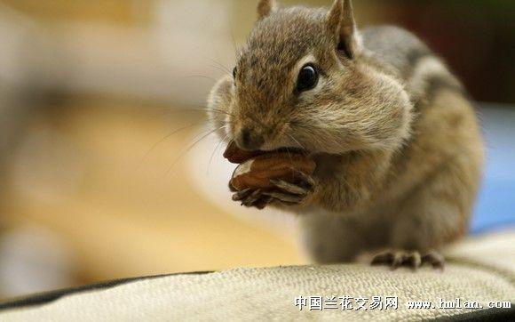而松鼠猴子它们只能吃这些