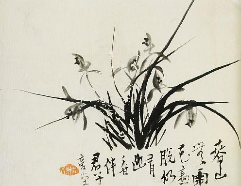姬子兰花手绘图片