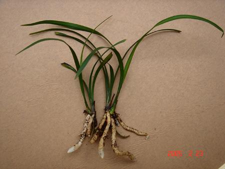 植物组织培养实验步骤