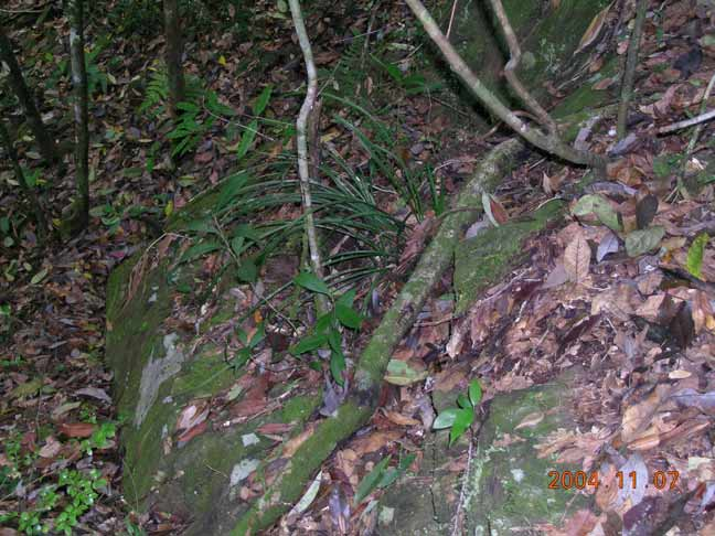 展示部分野生兰花生长环境图片(续)
